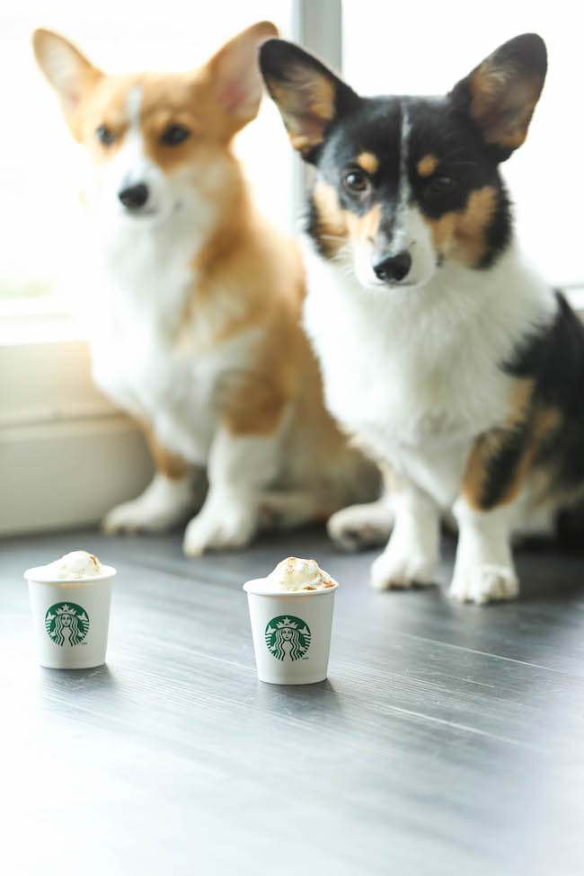 Healthy Pumpkin Puppuccinos - These pup-friendly drinks can be made in just 5 min with 5 ingredients that you already have on hand. So easy AND nutritious!